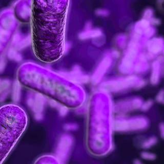 bacterias-salud-digestiva-b