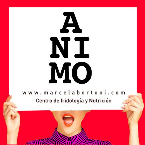 banner-animo